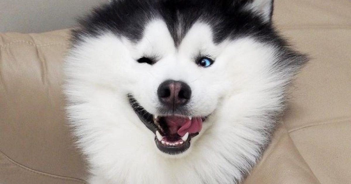 En este momento estás viendo 60 imágenes de un humor de perros para whatsapp o Facebook