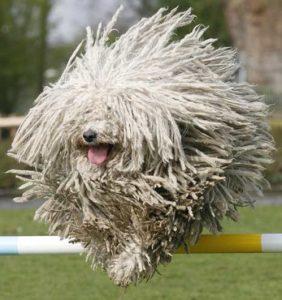 Lee más sobre el artículo Tipos de pelaje y ejemplos de algunos perros