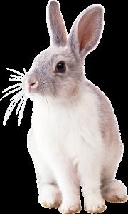 Lee más sobre el artículo 🐇 Peluquería en el conejo