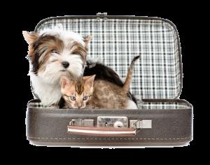 Consultar donde las Mascotas son Bienvenidas, aplicación