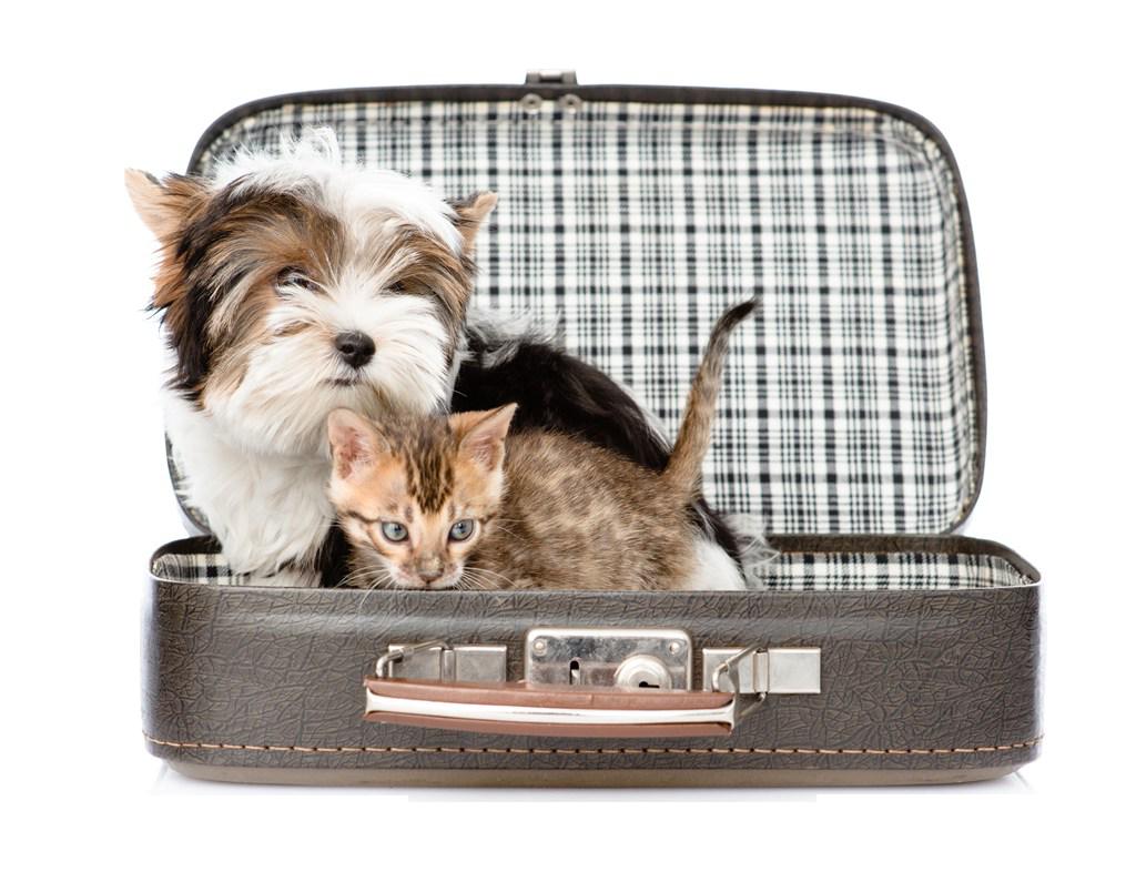 Lee más sobre el artículo Consultar donde las Mascotas son Bienvenidas, aplicación