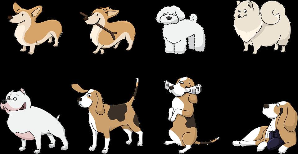 Cómo juegan los perros, 12 ideas para jugar juntos