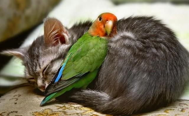 gato durmiendo con loro acurrucados