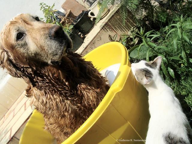 gato mirando a perro en la bañera