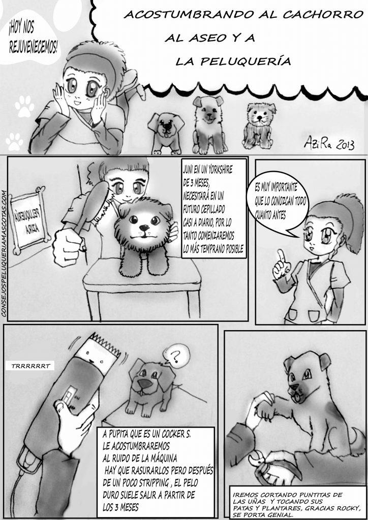 como empezar a peinar a un cachorro en viñetas