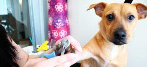 Lee más sobre el artículo Que es el Grooming y el Trimming en la peluquería canina