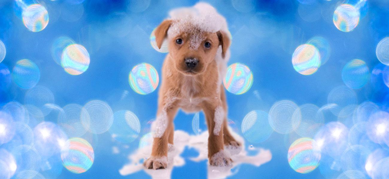 cachorro perro con espuma y burbujas