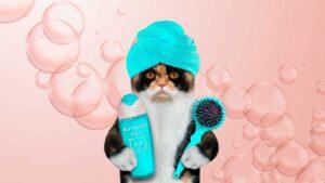 Cómo es la peluquería felina o bañar un gato