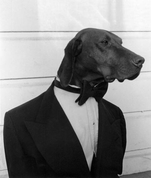 esmoquin perro