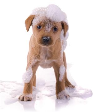 cachorro de perro con espuma