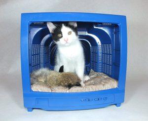 Lee más sobre el artículo 2 Camas originales para gato con material reciclable