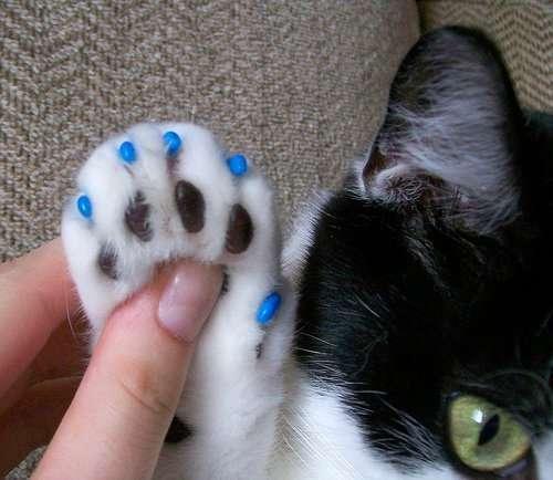 pata de gato con fundas de uña de color azul