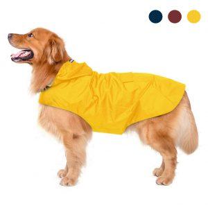 golden retriever con chaqueta