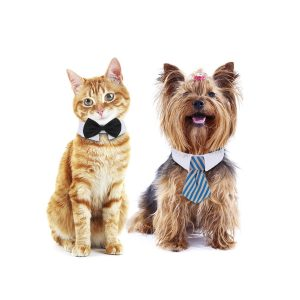 gato y perro con corbata elegantes
