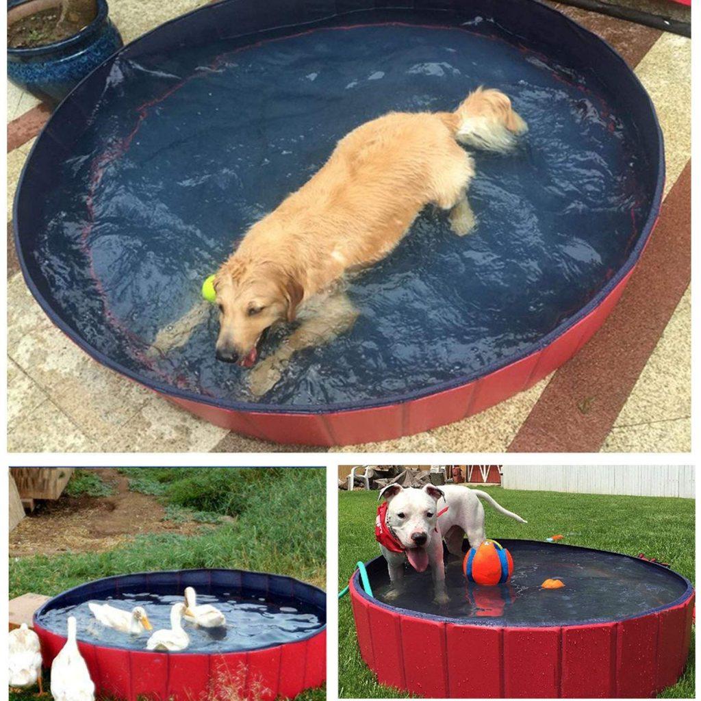 piscina roja perros grandes llena de agua