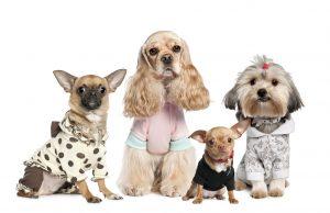 Lee más sobre el artículo LAS MEJORES PRENDAS DE ropa para perros y gatos 【2021】