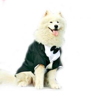samoyedo vestido con traje de boda