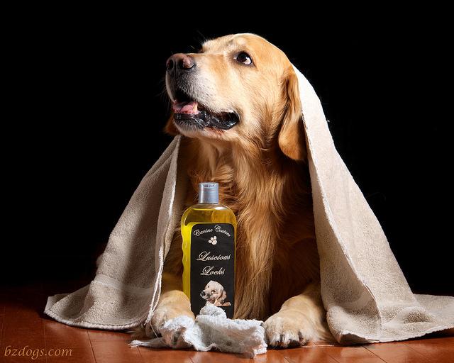 todos los tipos de champú para tu perro