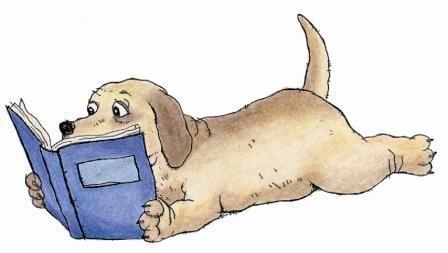Lee más sobre el artículo LIBROS de peluquería canina de tapa dura o blanda 【2021】