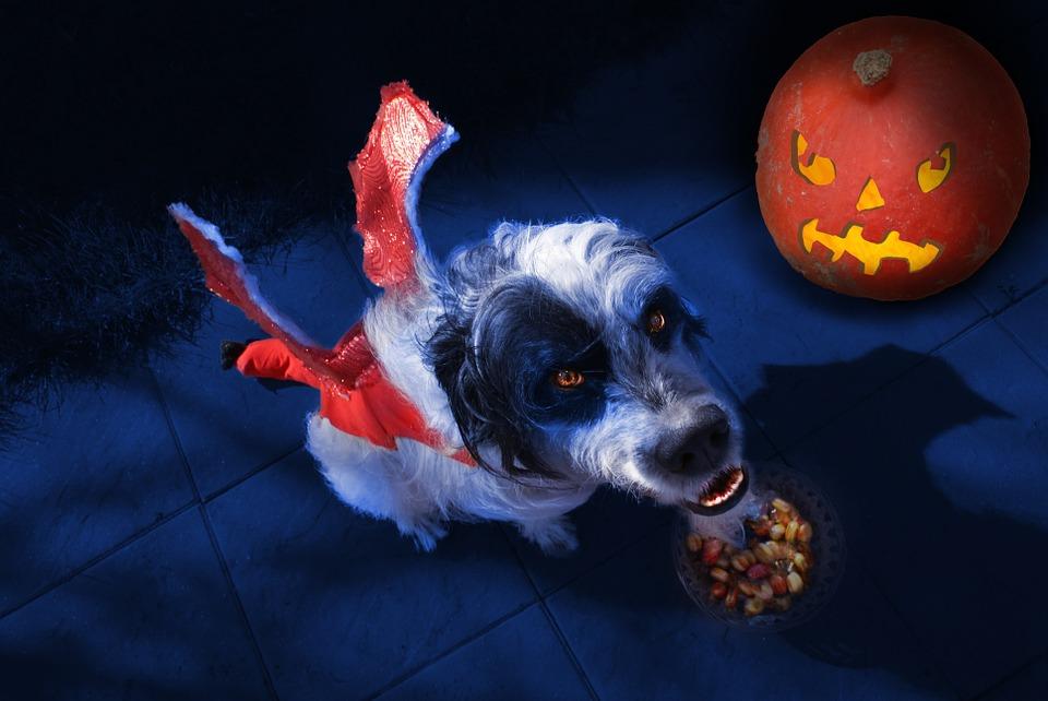 🕷 13 disfraces de HALLOWEEN para mascotas con tinte especial
