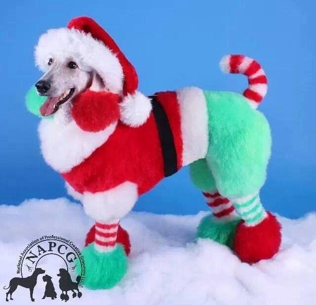 Navidad de perros