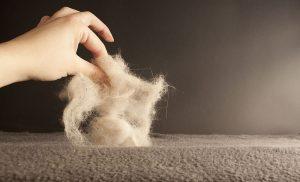 manojo de pelos de perro de color crudo sujetado con una mano