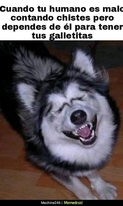 En este momento estás viendo Un Perro Trabaja, pero Hasta Cierto Punto…
