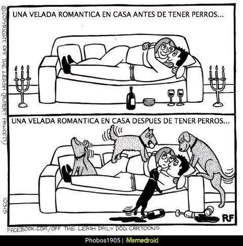 romantico perros