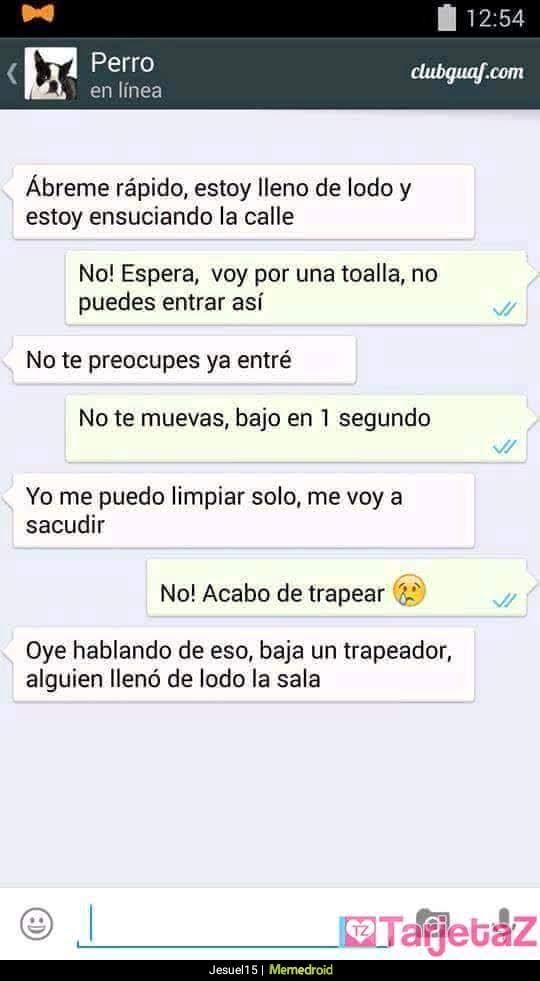 conversación whatsapp perro