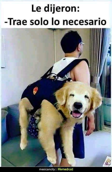 perro grande en mochila, transportin