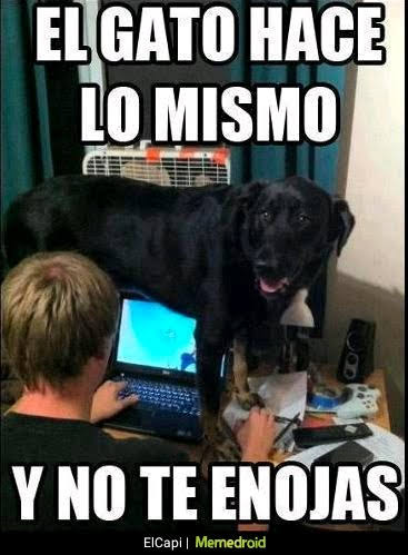 perro en laptop, ordenador