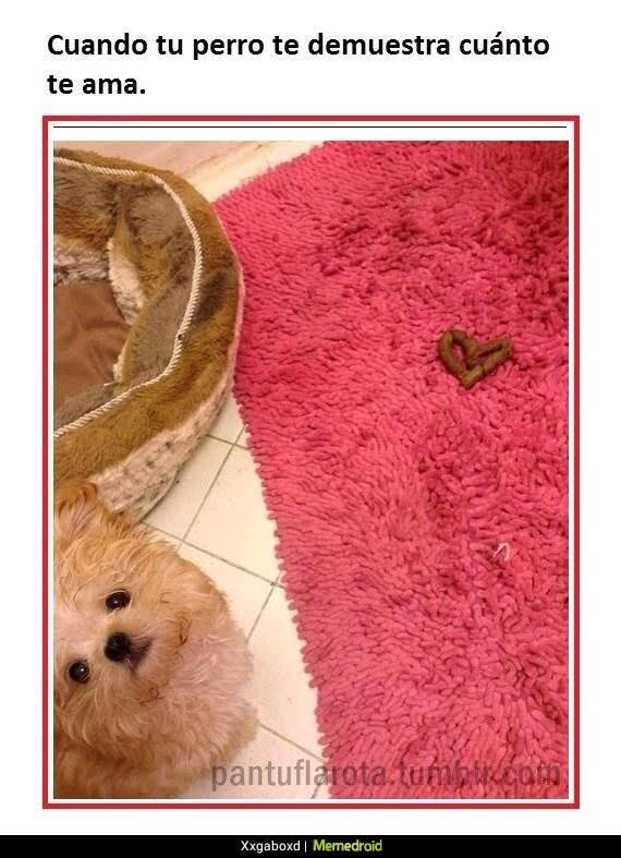 perro con caca de corazón