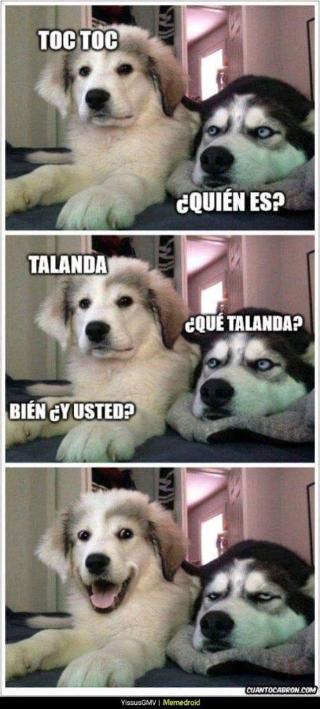 perro cachorro contando chiste