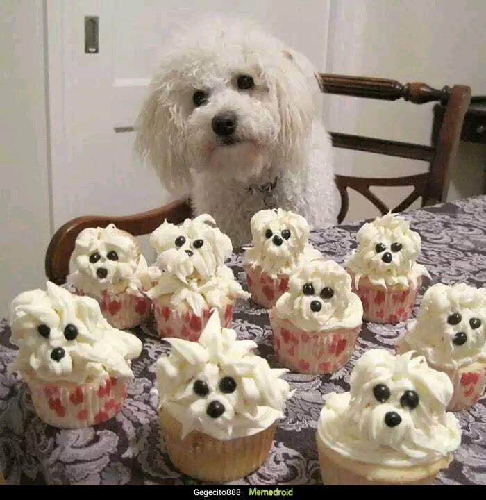 caniche con pasteles, cup cakes de nata