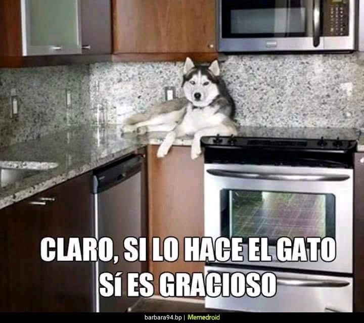 perro subido en la cocina