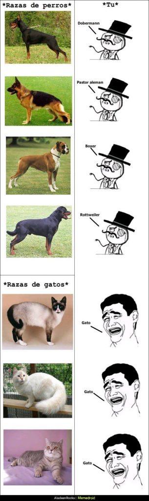 razas de gato y perro meme