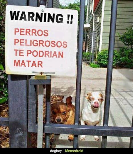 atención perros peligrosos