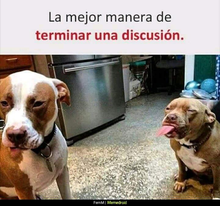 perro pitbull sacando la lengua