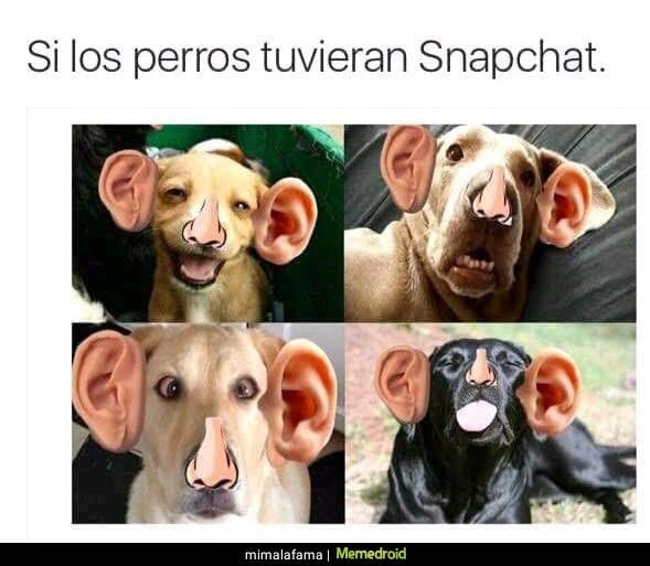 snapchat perros