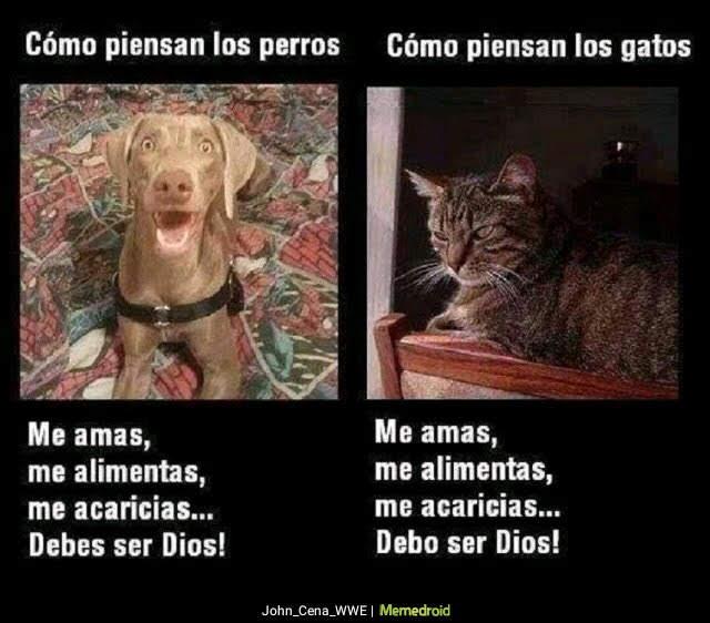 como piensa el perro , el gato