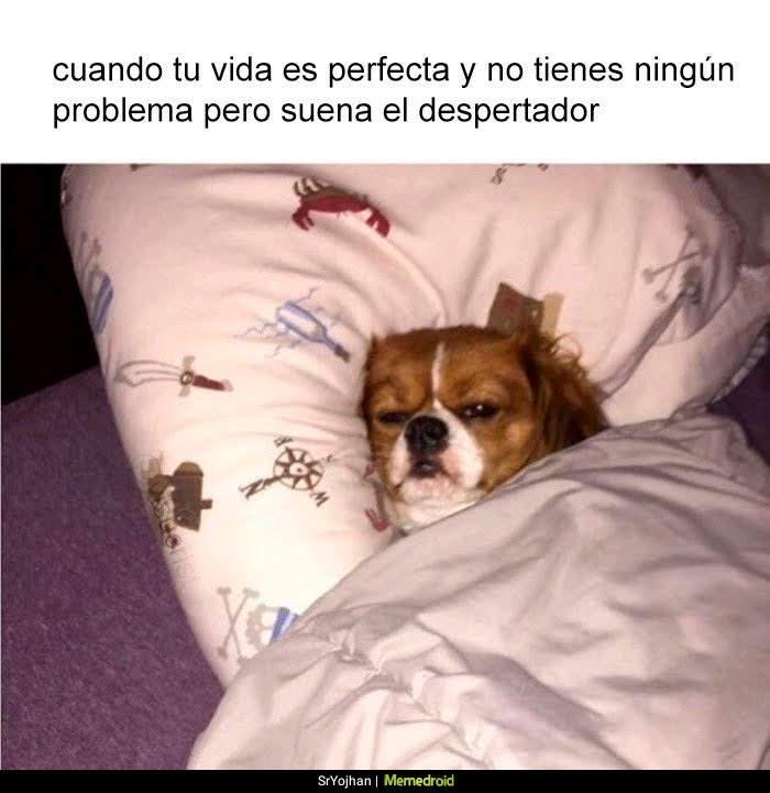 perro en la cama tapado