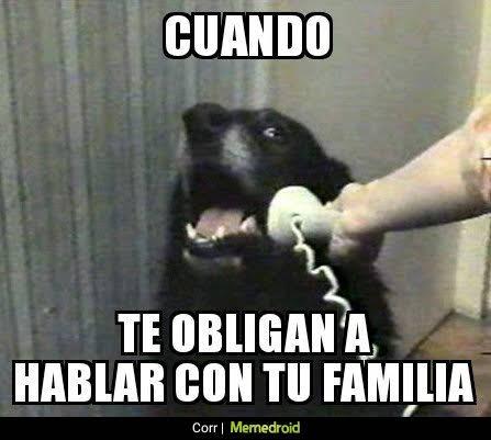 perro obligado a hablar