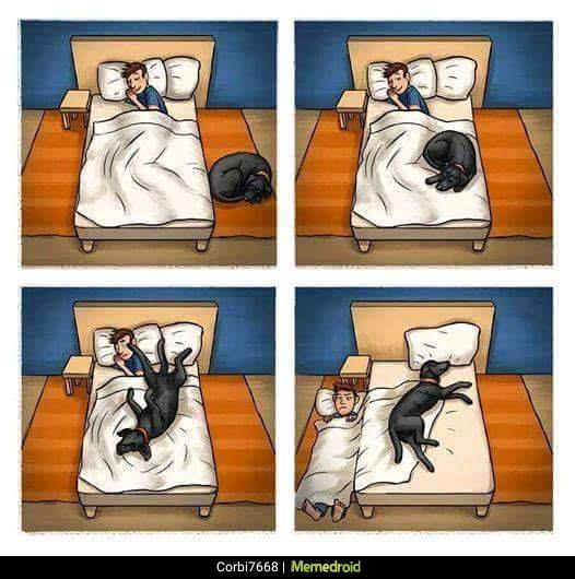 perro echando de la cama