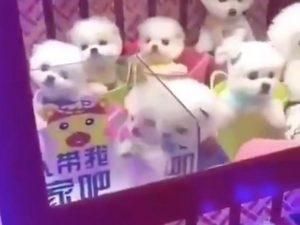 Lee más sobre el artículo CACHORROS de perro en una MAQUINA de juegos en china