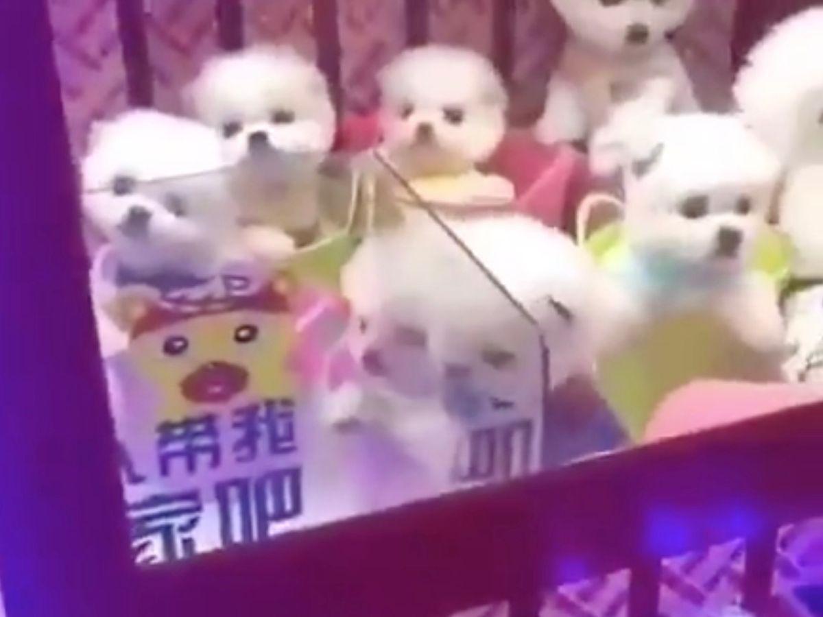 En este momento estás viendo CACHORROS de perro en una MAQUINA de juegos en china
