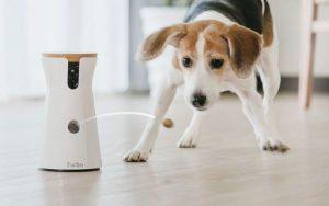 Lee más sobre el artículo ¿Como NO dejar a tu perro solo cuando NO estás en casa?