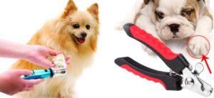 Lee más sobre el artículo ✂ MEJORES Corta-uñas y limas para mascotas