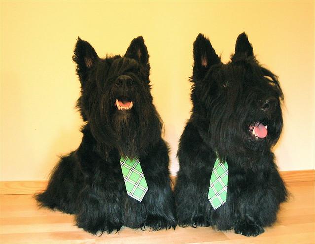 2 perro escoces con corbata verde