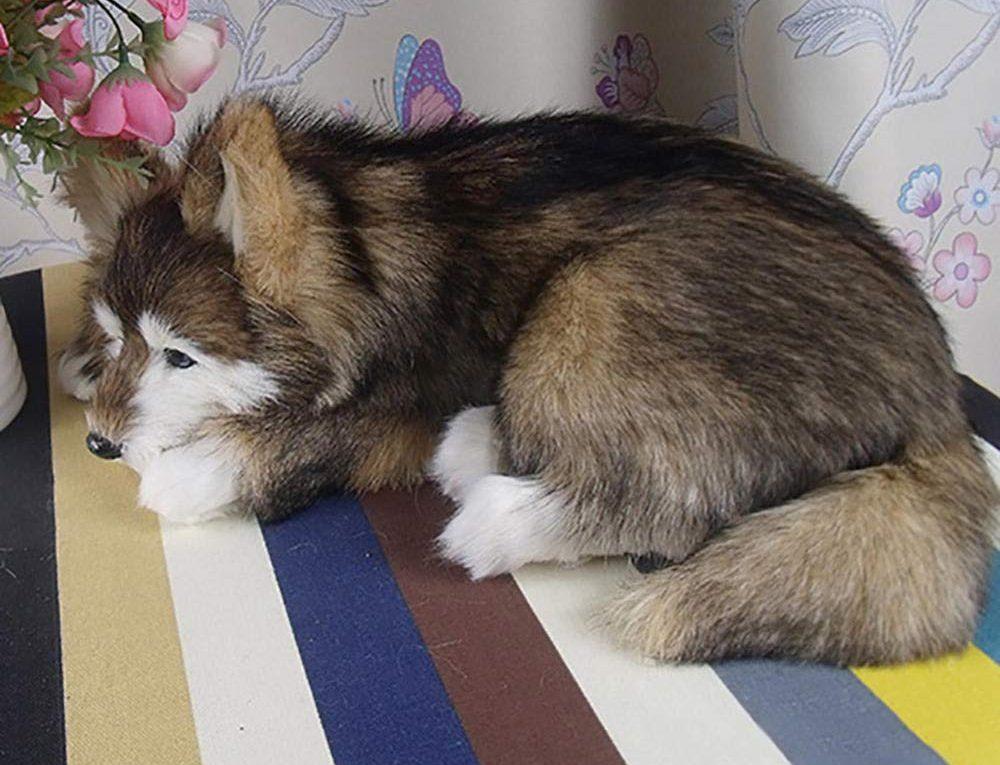 Husky siberiano tumbado en el suelo