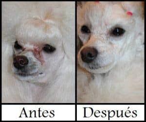 producto para eliminar manchas de los ojos en perros